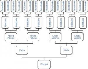 Estudios de Antepasados