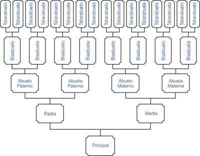 Árbol genealógico lineal vertical