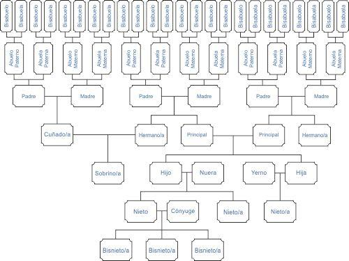 Como dibujar el rbol geneal gico de la familia for Nombres de arboles en ingles