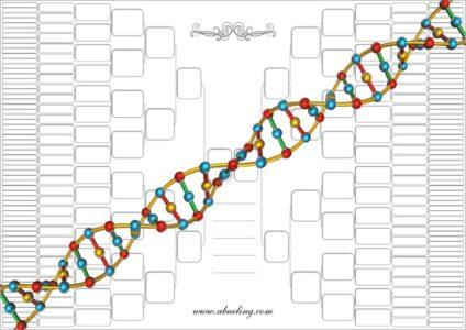 Soluciones a los Árboles Genealógicos para pensar